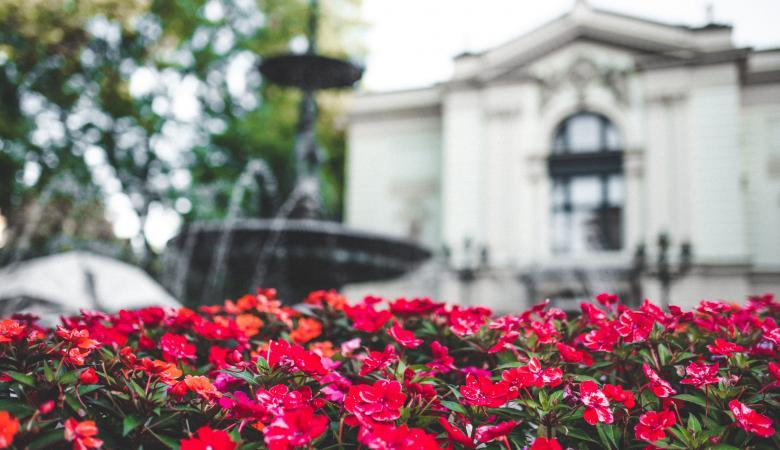 Na pierwszym planie czerwone kwiaty na klombie, na drugim planie - fontanna i budynek Teatru Polskiego